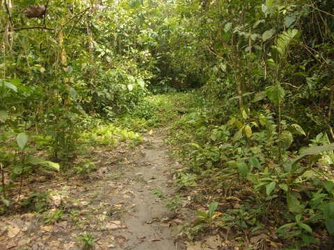 Caminatas Al Río Sagú