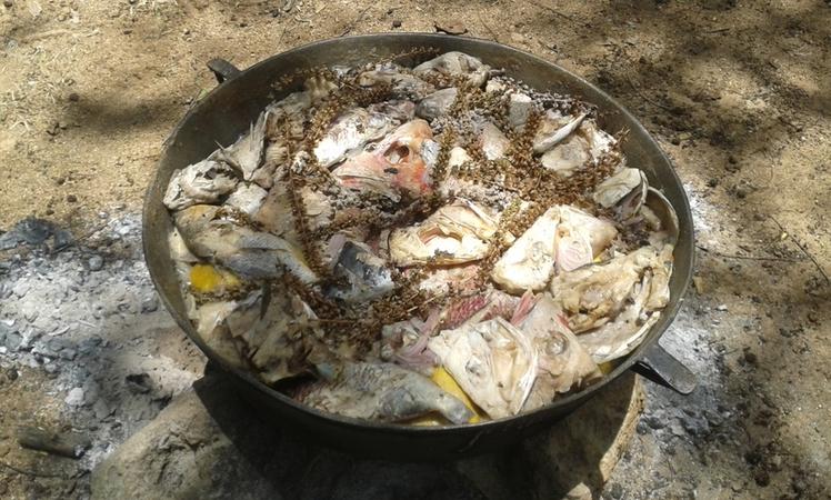 Preparacion de Comida Tipica