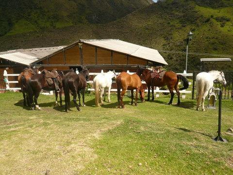 Cabalgatas - El Encanto