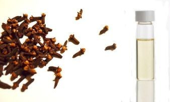 clove and clove oil