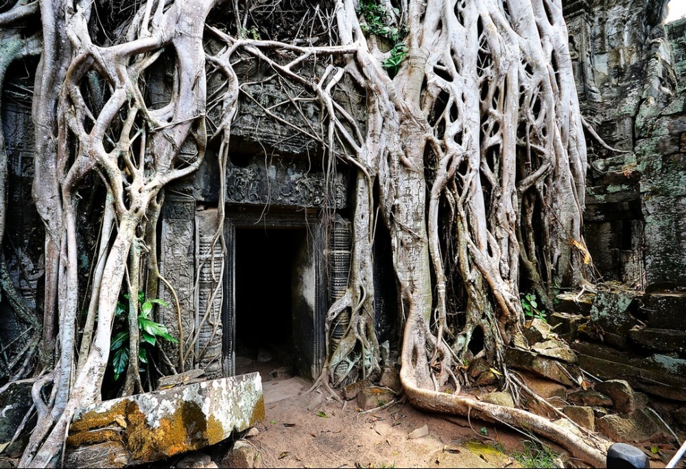 An Open Door With Roots Covering Everything Else