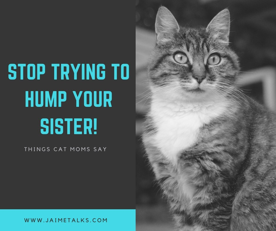 Things Cat Moms Say
