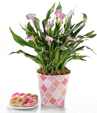 lilies-mothers-day