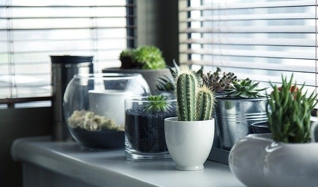 Many cactus plants in pots on an indoor table.
