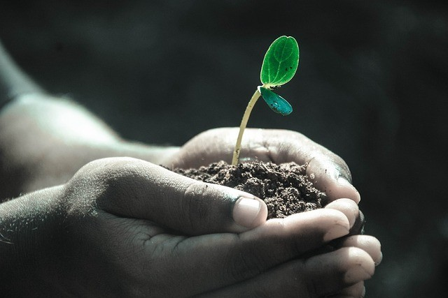 Plant tomato seeds