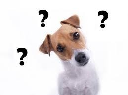 dog with questions