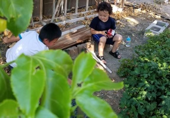 nephews playing in my garden