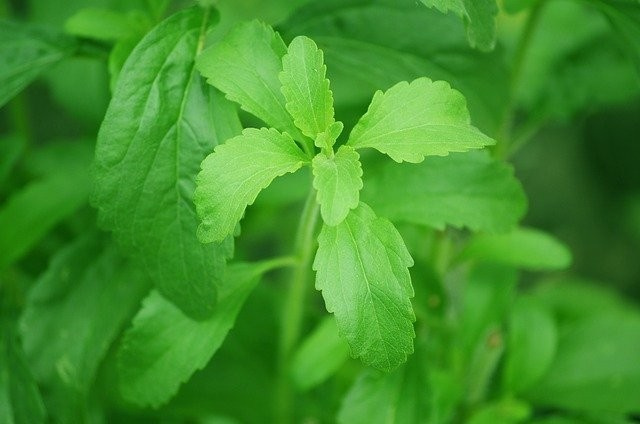 Stevia - A Natural And Healthy Sweetener