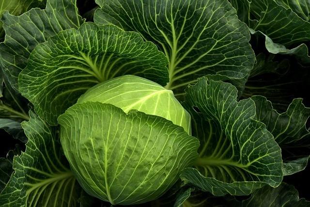 Innate Response Formulas Womens Multivitamin Gets Its Vitamin K From Cabbage