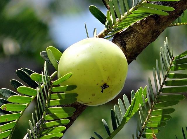 Natural Factors Whole Earth & Sea Womens Gets Its Vitamin C From Organic Amla