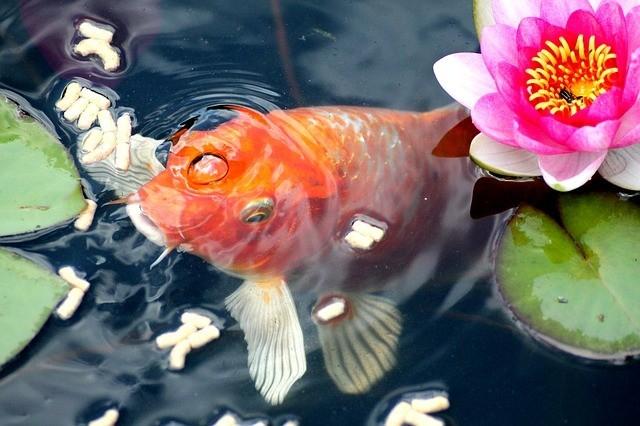 gold fish food pellet