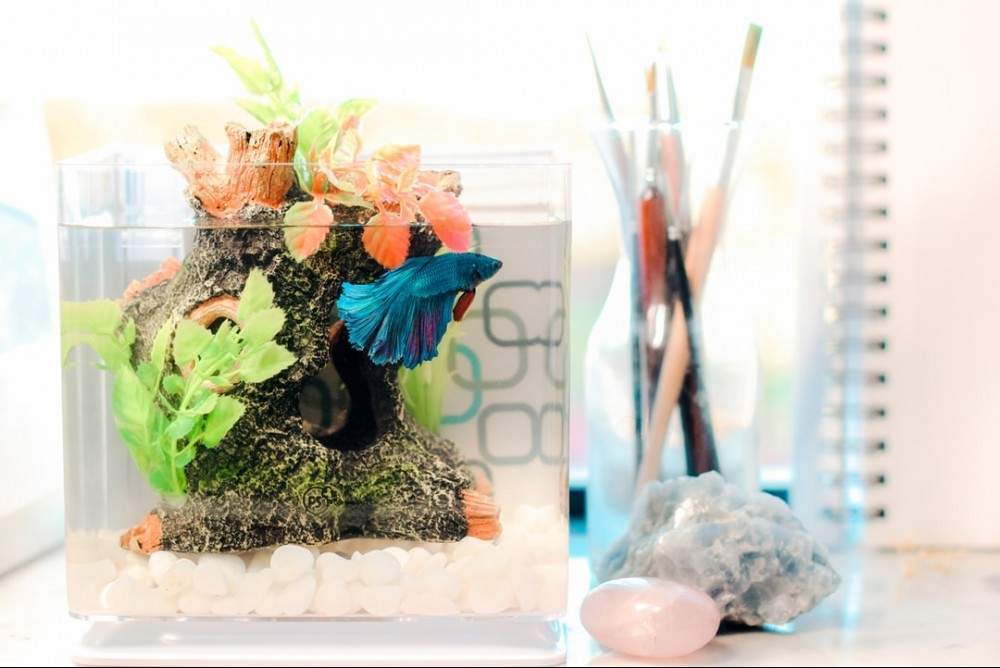 nice betta fish aquarium on tabletop