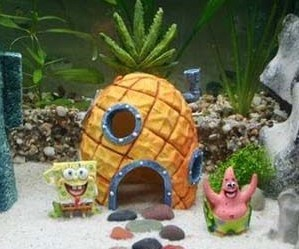 spongebob betta fish coconut cave