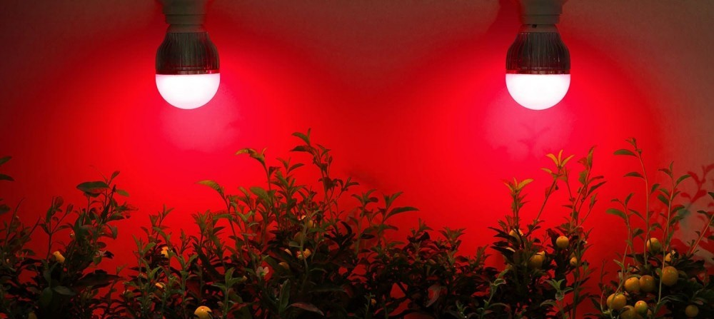 infrared light therapy for plant growth