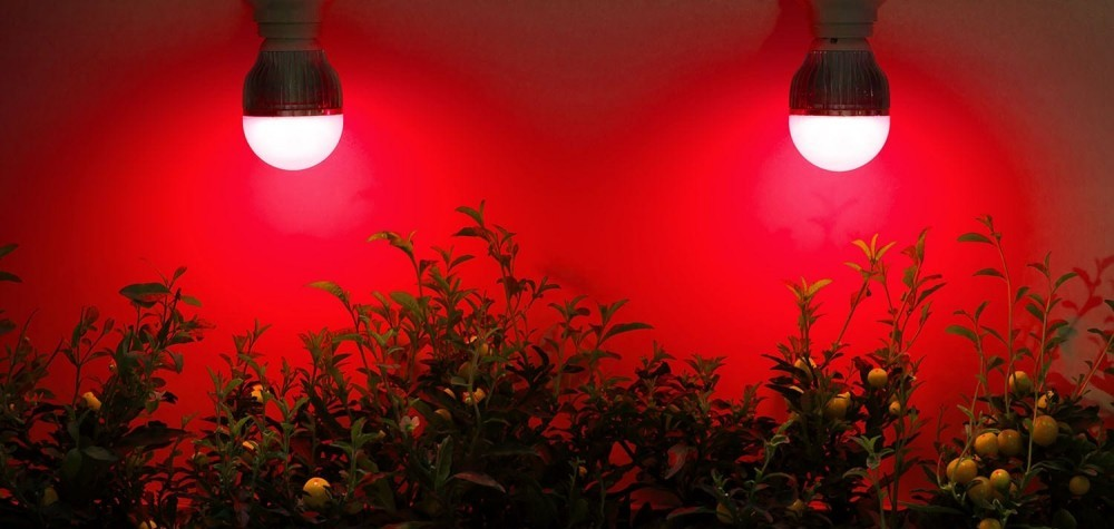 red light therapy for plants