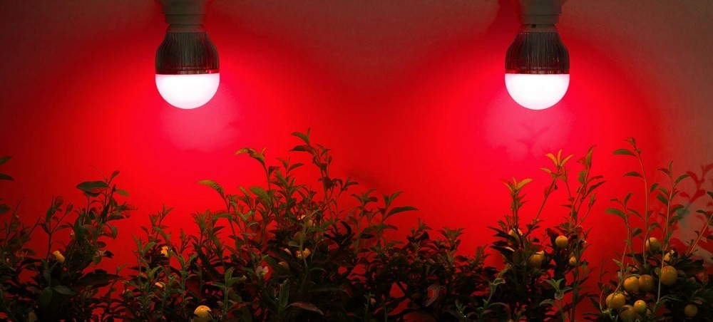 infrared light therapy used for growing plants
