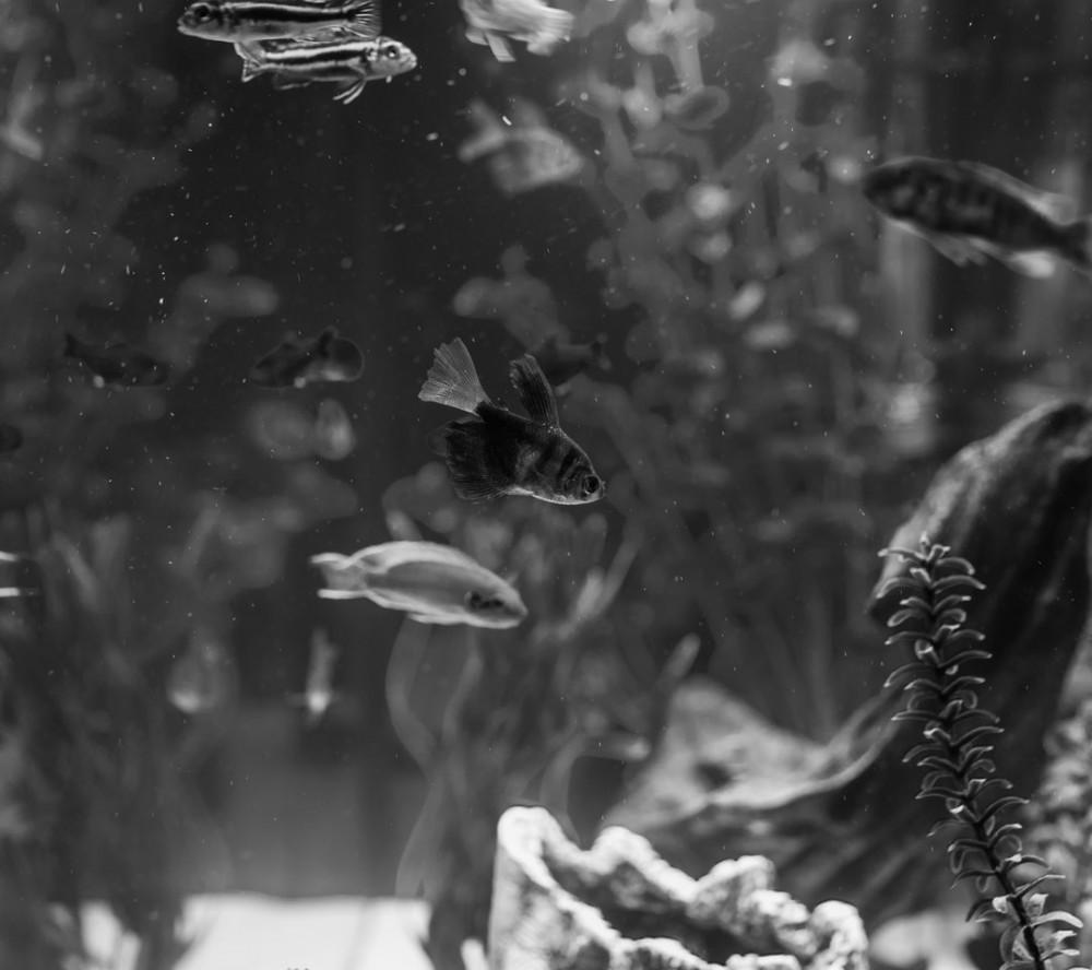 Fish Mates