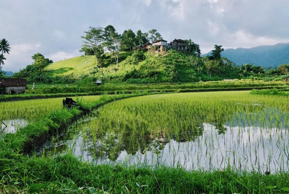 rice paddies in thailand