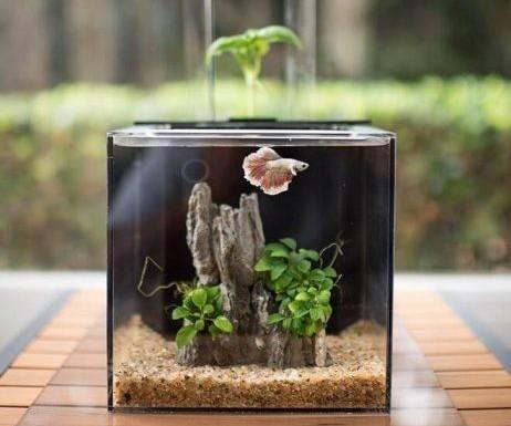 aquaponics aquarium setup