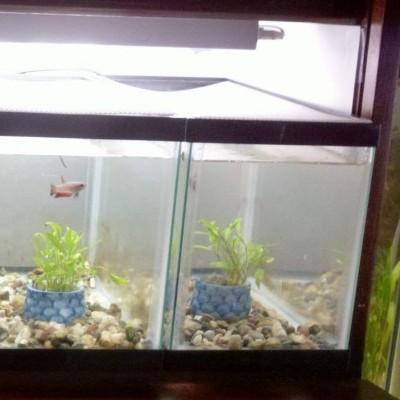 aquarium with divider