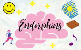 What is the endorphins function ?