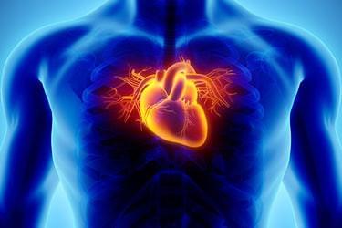Minimizing The Risk Of Heart Disease