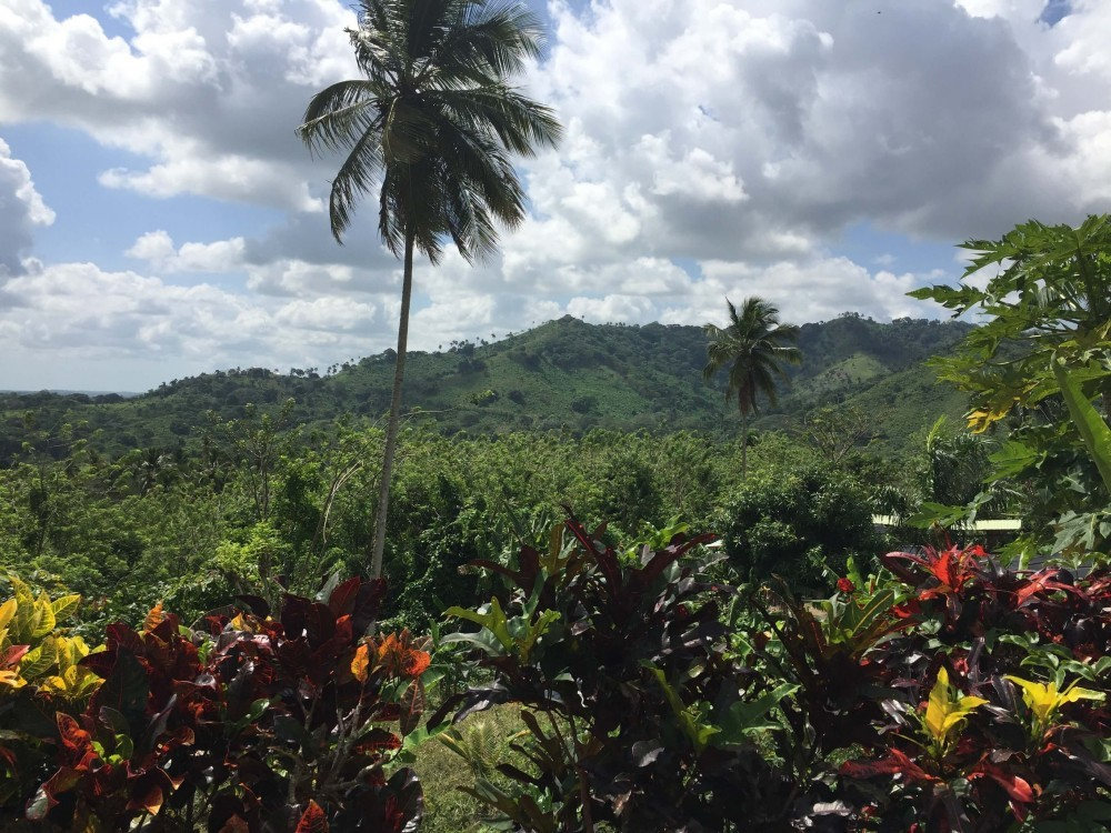 Dominican jungle