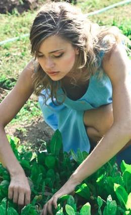 Garden will rid stress