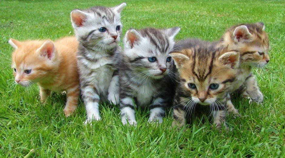 animal and pets like cats