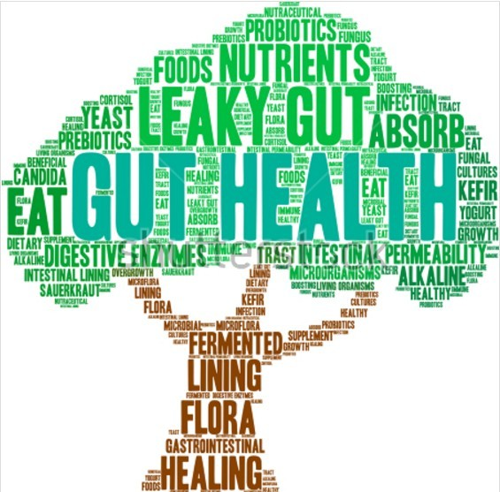Gut Health and Autoimmune Disorders |Review