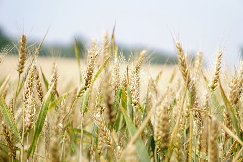 What is the main gluten misconception?