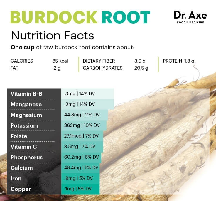 Nutrition facts about burdock root