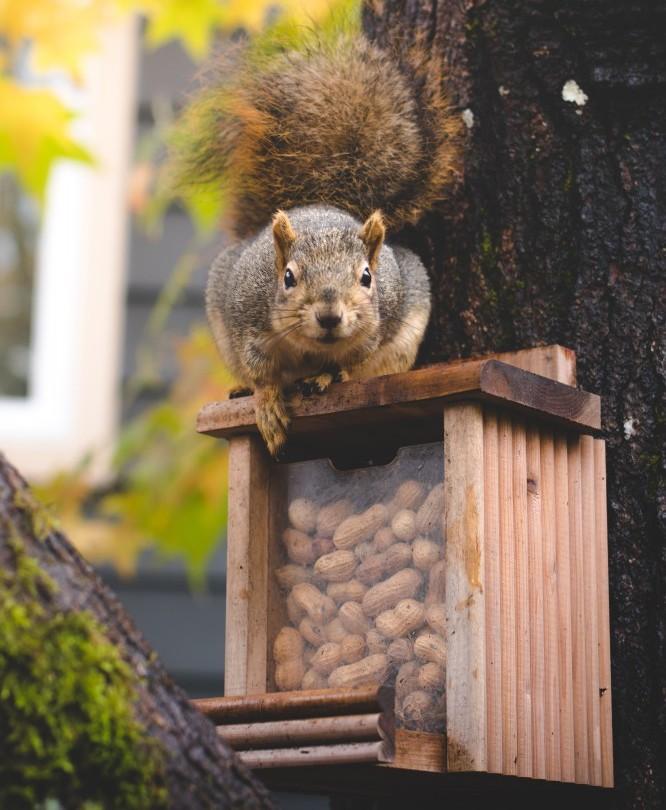 Squirrel Saving