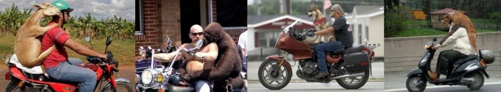 Animals on Motorbikes
