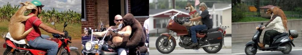 Animals on Motorbikes