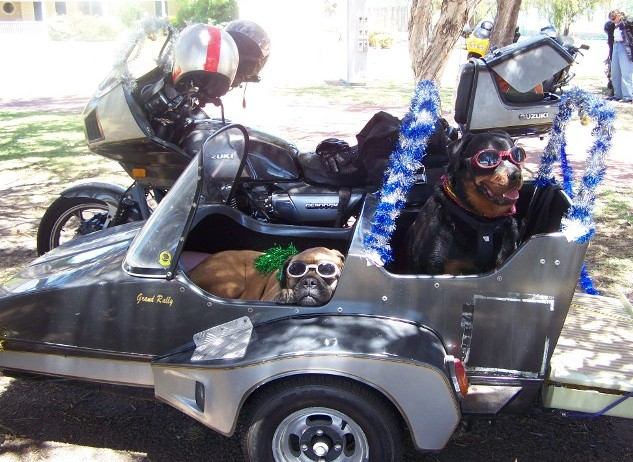 Motorcycle Sidecar Dogs