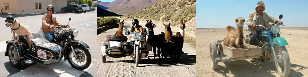Motorcycle Sidecar Animals