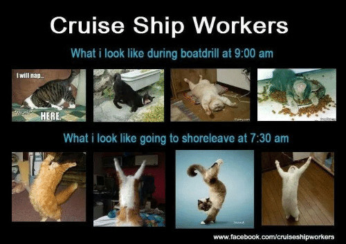 Cruise Questions Answered