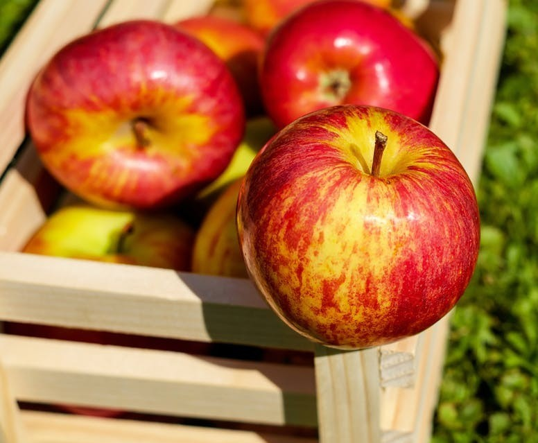 fresh apples for weight loss