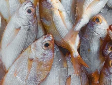 more fish in menu