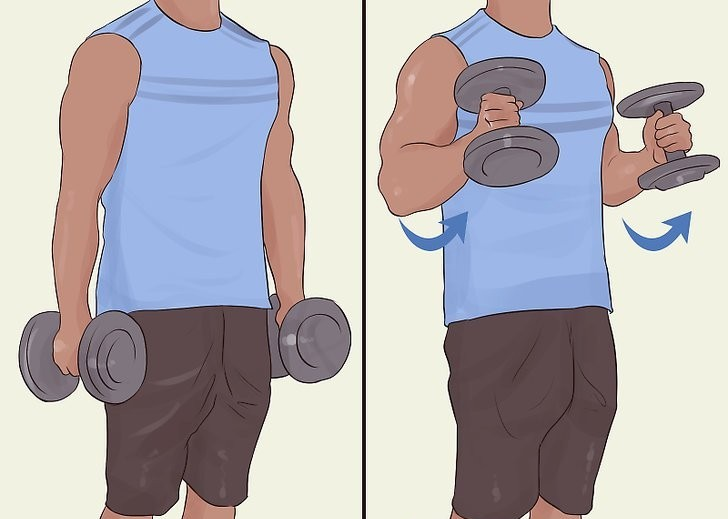 how to bicep curl using dumbells 2 position image(image courtesy of wikihow)