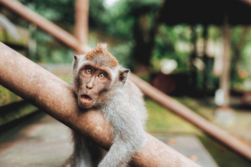 shake-the-monkey