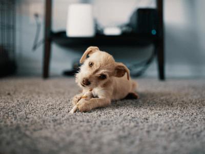 Carpets Lower Winter Electric Bill