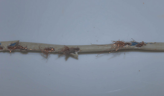 Rodent Damaged Wires Waste Electricity