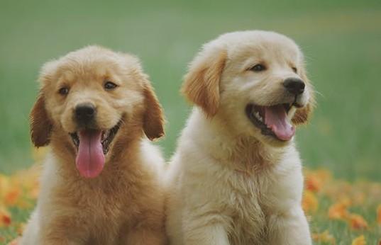 health benefits to having a dog