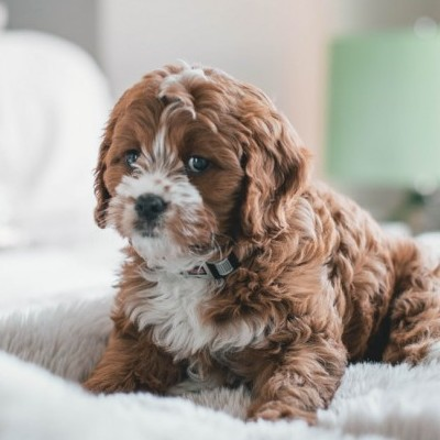 Fun Facts About Puppies