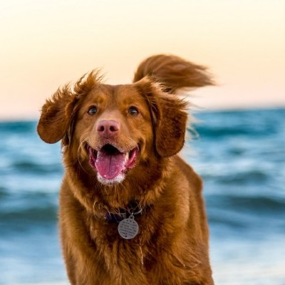 health benefitsto having a dog