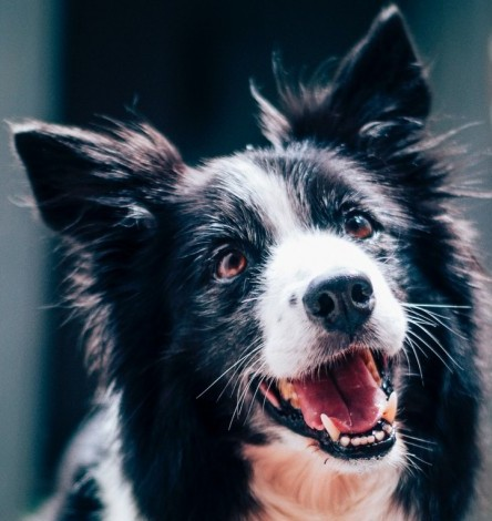 What Are Symptoms Of Diabetes In Dogs