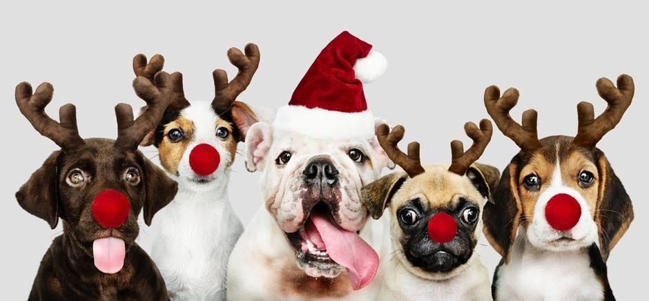 dogs with reindeer ears