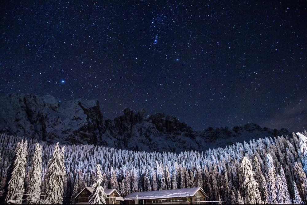 snow covered pine trees at night